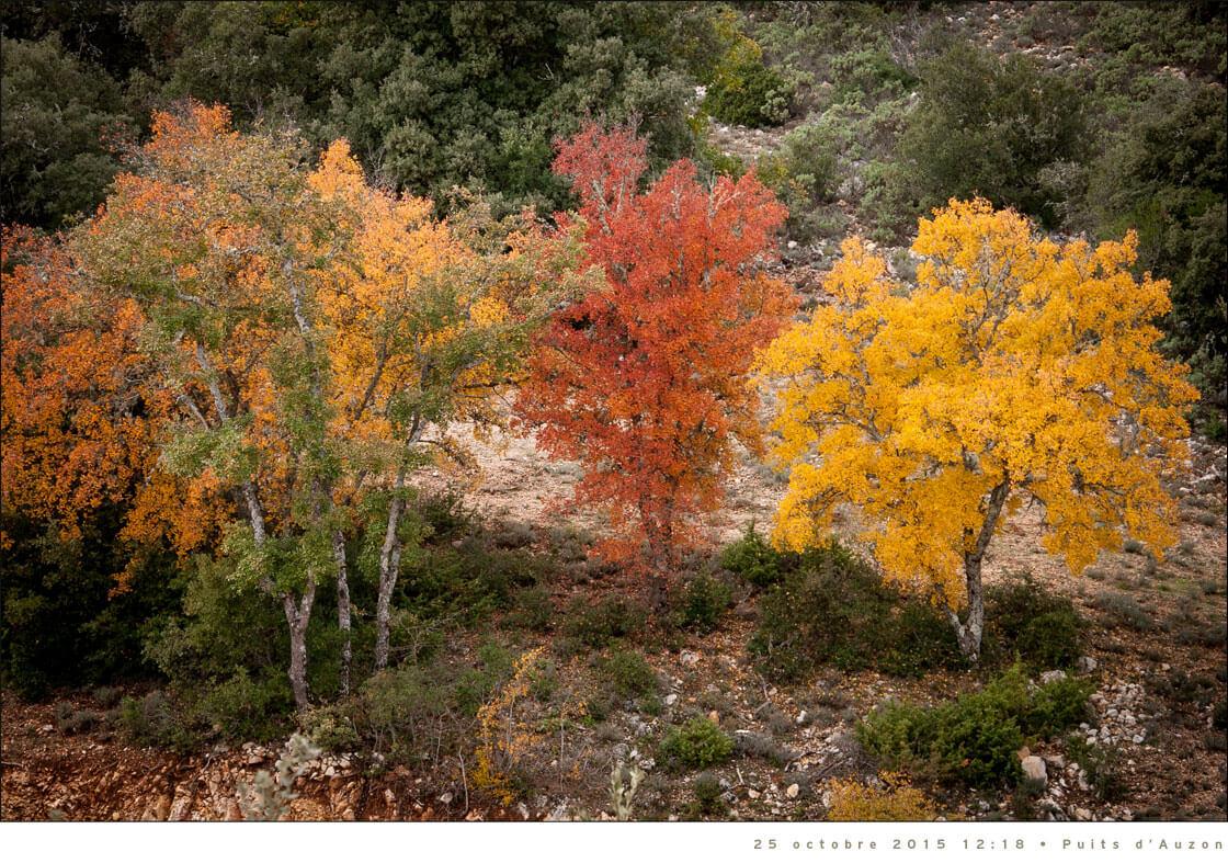 arbres-automne-1120px