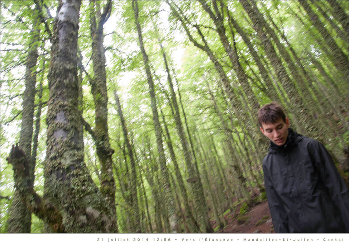 Foret-Cantal-Mandailles-1120px